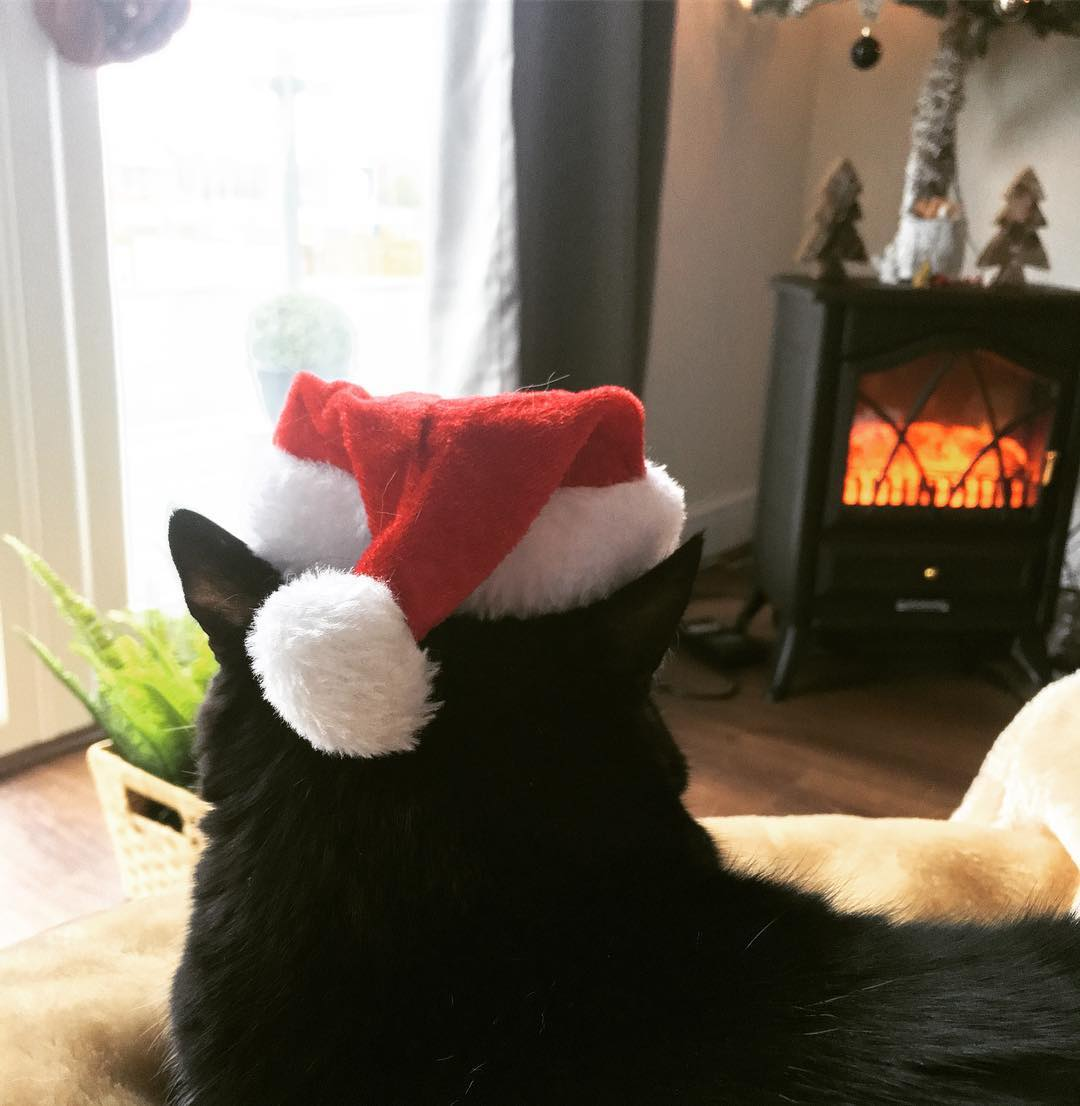 Black cat wearing a Christmas hat.